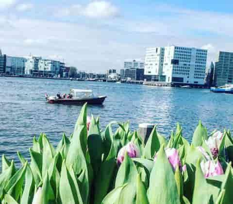 coffeeshop-boat-tour-waterside-tulips
